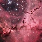 Celestial Rose II Sivarulrasa 2012
